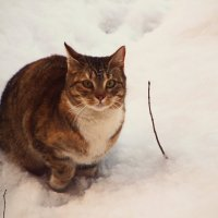 Кошка-Охотница :: Алексей Корнеев