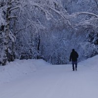 Прелесть зимы! :: Olga Rosenberg