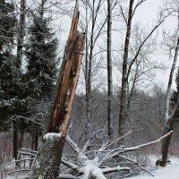 Сломанное дерево :: Галина (Stela) Кожемяченко