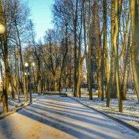 В зимнем парке тополя :: Милешкин Владимир Алексеевич