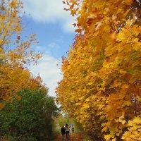 Осень :: Алина Шевелева
