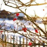 Зимнее утро :: Анна Богданова