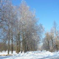 Мороз и иней. :: Александр Атаулин