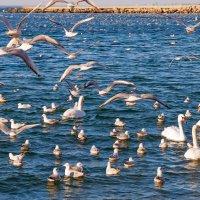 Морская живность в Анапе :: Елена Васильева