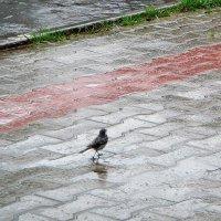 """""""...а мне не страшен ни дождь, ни ветер..."""" :: helga 2015"""