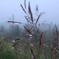 в тумане... :: helga 2015