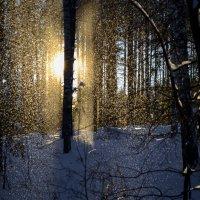 Снегопад :: Роман Васенин
