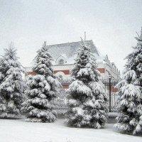 Рождественский наряд. :: Мила Бовкун