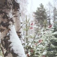 Зимнее настроение :: Татьяна Афанасьева