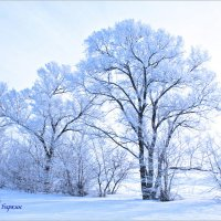 зима :: Евгений Баркин