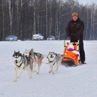 Зимние забавы :: Валерий Шибаев