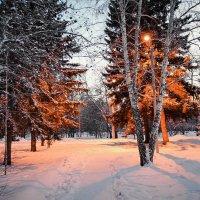 Зимняя красота. :: Света Кондрашова