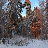 Зимний лес... :: олег