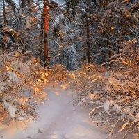 Золото зимнего леса... :: олег