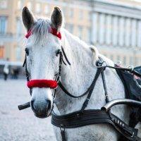 Рабочая лошадка :: Светлана Печорина