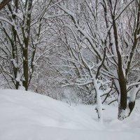 снег :: владимир