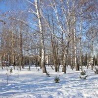 Солнечная зима :: Лидия (naum.lidiya)