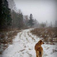 Идём к остановке! :: Владимир Шошин