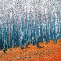Танцующий лес :: Lilinum (Анна Волкова)