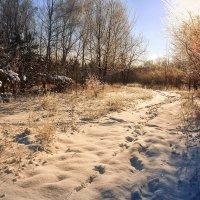 Зимними тропами :: Cергей Дмитриев