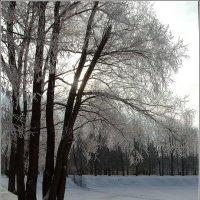 Снег выпал только в январе *** Snow fell only in January :: Александр Борисов