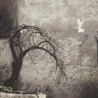 Вечное одиночество... :: Roman Mordashev