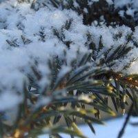 снег искрится... :: helga 2015