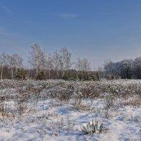 Пушистый  снег. :: Валера39 Василевский.