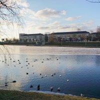 Калининград. Нижнее озеро. :: Murat Bukaev