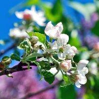 Все весной цветет и пахнет! :: Наталья