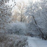 Зимняя сказка :: marmorozov Морозова