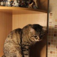 Кошак :: Владимир Шамирзаев