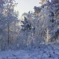 Рождественские морозы :: Сергей Щербинин