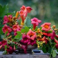 Цветы – остатки рая на земле :: Luis-Ogonek *