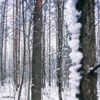 Зимний лес :: Dirty Priest