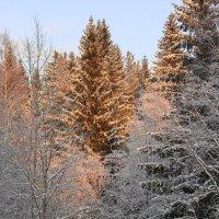 Солнышко в лесу :: Светлана Печорина