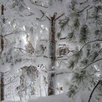 В снежном царстве. :: Сергей Адигамов