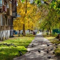 Золотая осень :: Михаил Кузнецов