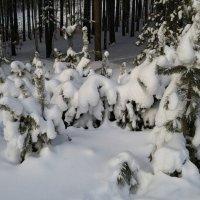 Под снежным покрывалом. :: Сергей Адигамов
