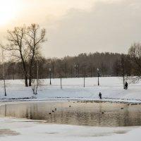 зимний пруд :: Олеся Семенова