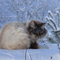 Холодно... :: Владимир Павлов