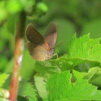 Я-бабочка! :: Олег Фролов