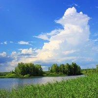 Лето :: Александр Щеклеин
