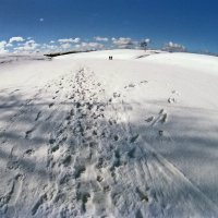 Прогулки по льду :: Валерий Талашов