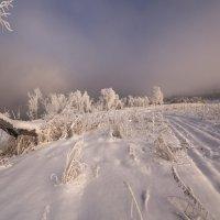 снова в путь :: Дамир Белоколенко