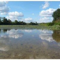 В реку смотрятся облака... :: Ольга Симонова