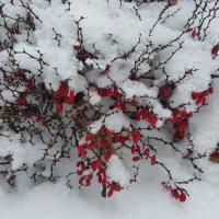 Зима в саду. :: Елена Савчук