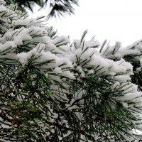 В снежном убранстве... :: Светлана