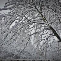 Зима в Марьиной Горке :: Julia Pr.