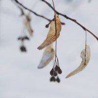 Парус на весну :: Наталия Григорьева